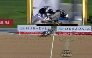 FAZZA AL KHALEDIAH second in Kahayla Classic